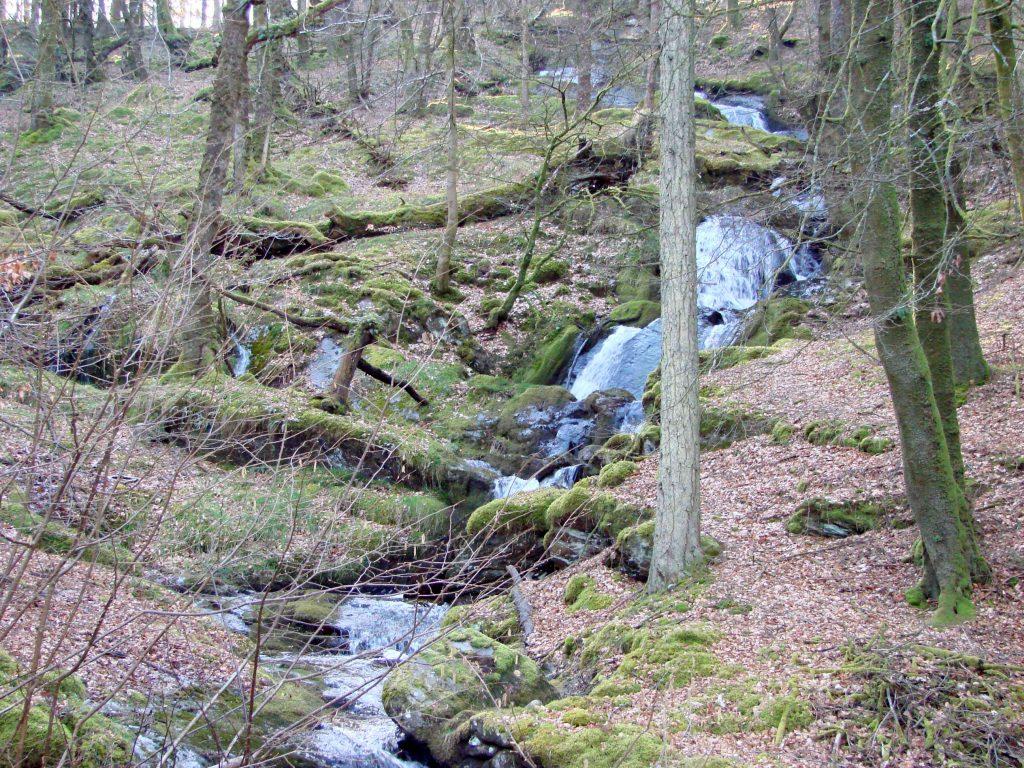 A waterfall tumbles down through an Elan Valley wood.